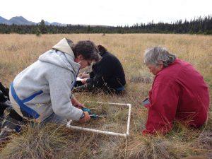 Northern Caribou Grassland Habitats