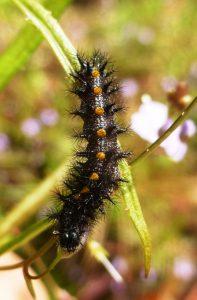 TC Caterpillar photo P. Karsten