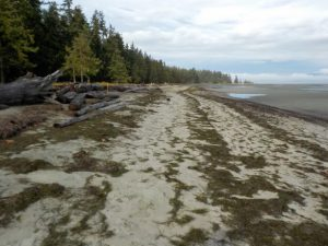 after-seawall-removal